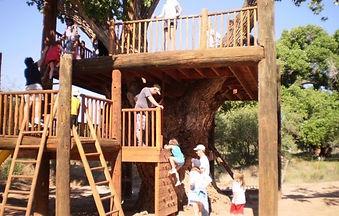 JR Tree House.jpg