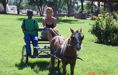 JR Horses & Donkeys.jpg
