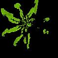 herbal medication.png