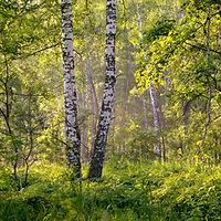 summer-2913409_1920.jpg