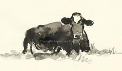 Little black cow