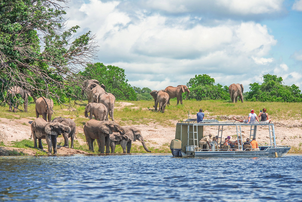 river cruise group travel africa safari elephants exotic chobe river
