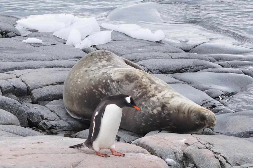 Antartica, Trip-Of-A-Lifetime, Culinary Adventures, Inspiring Ideas, Bucket List Experience,