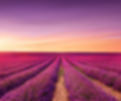 provence_photo.png