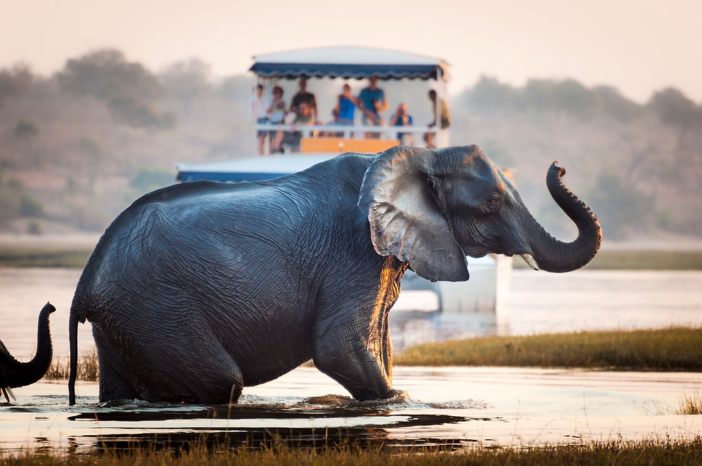 Exotic river cruises Nile Chobe Volga Mekong Ganges Amazon Yangtze Ayeyarwady travel advisor group travel Erin Smith ~ Affinity Group Travel Advisor