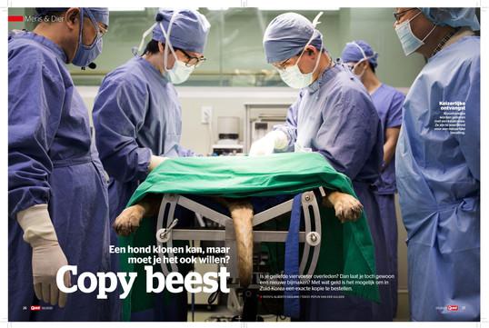 MAGAZIN: QUEST MAGAZIN FOTOGRAF: ALBERTO GIULIANI STRECKE: DOGS CLONING LEISTUNG: BILDREDAKTION