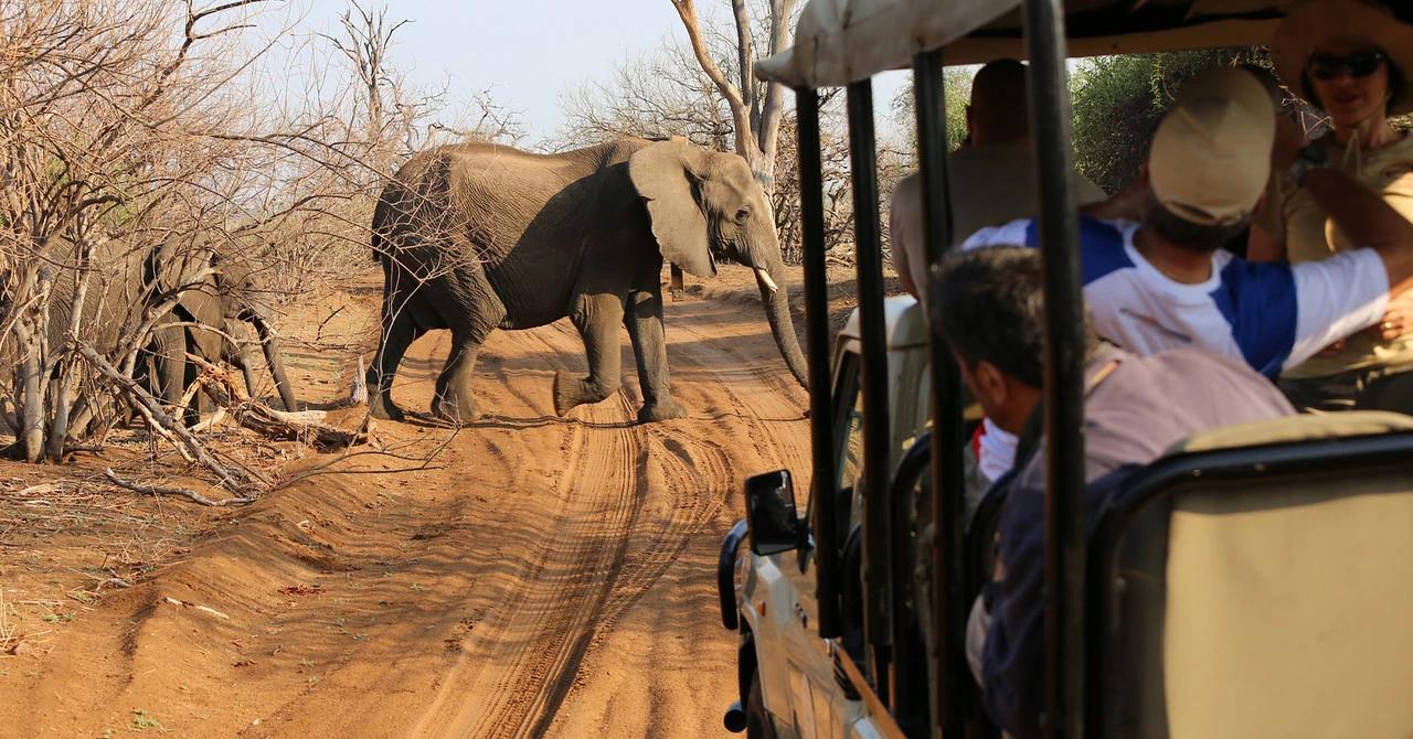 safari africa do sul elefante