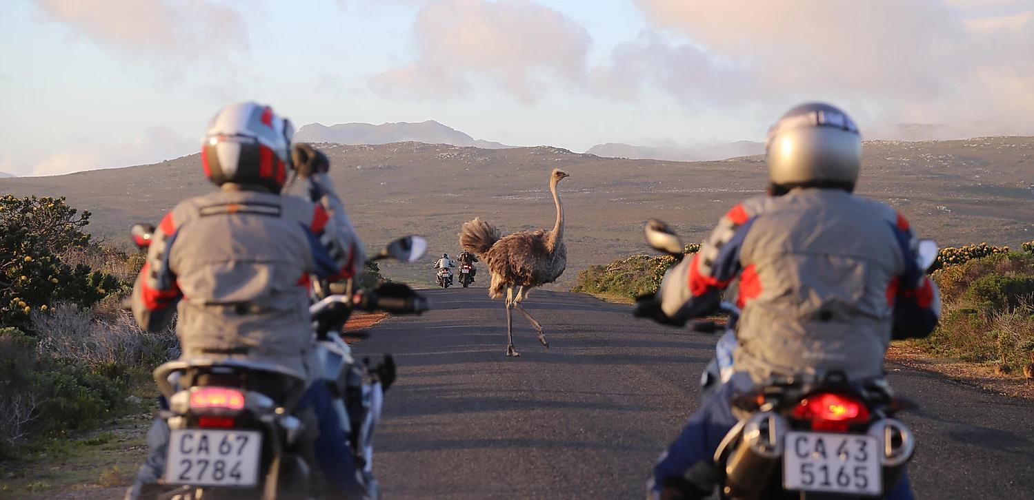 animais na pista africa do sul