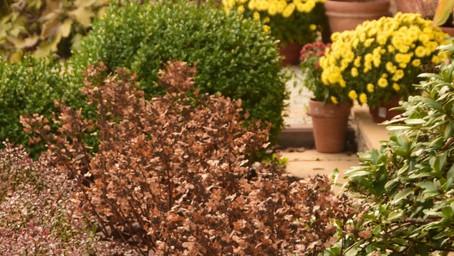 Czy trzeba obcinać rośliny na zimę?