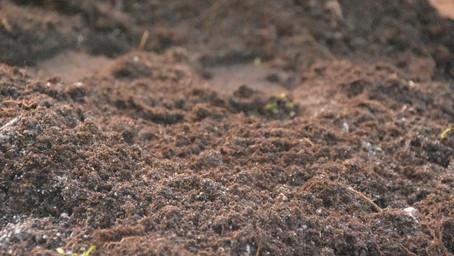 Co to jest wapnowanie gleby?