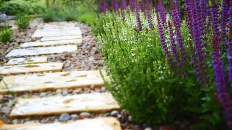 Witajcie na moim blogu ogrodniczym!