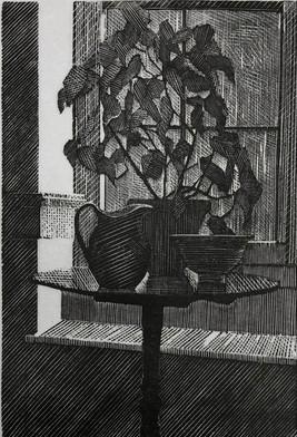 Begonia in a Window