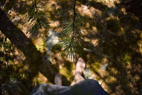 metsäkävely2.jpg
