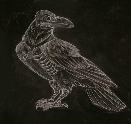 Raven Spot Illustration