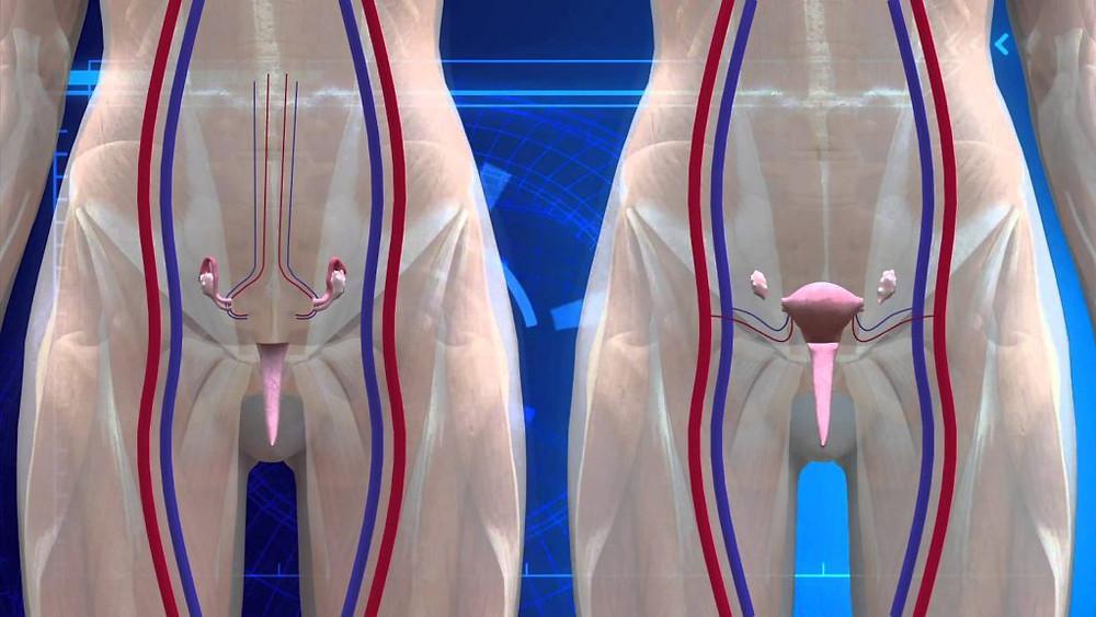 uterus transplants
