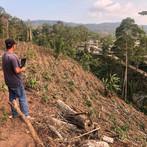 Linda Finca y nuevas plantaciones 🌱☕️ .