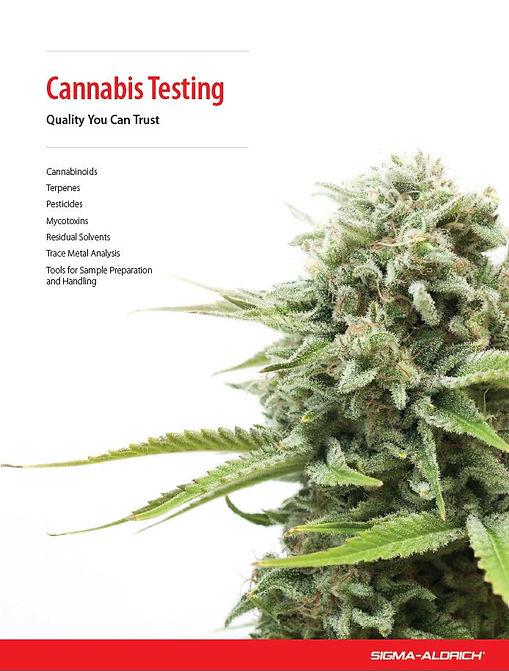 stadar cannabis.JPG