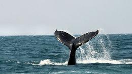 Whale Watchin Libra Holiday flats Unit 7