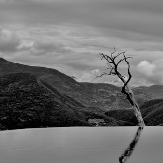 The Lonely Tree of Hierve El Agua