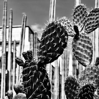 Those Thorns