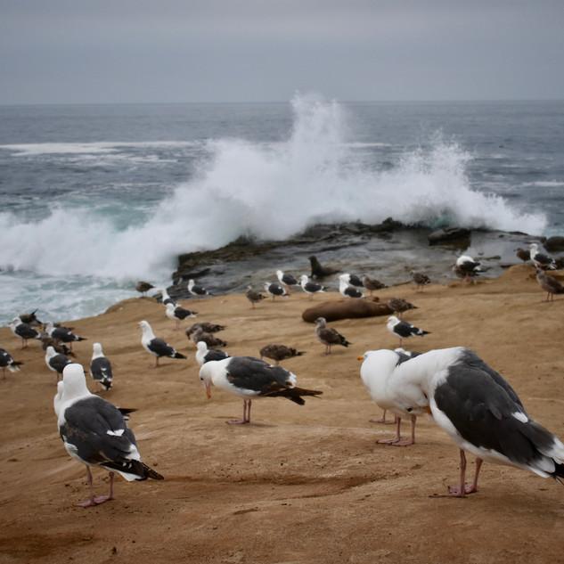 Birds & Wave