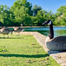 Byrd Park, Richmond