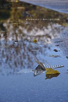 i Colli Euganei dopo una pioggia in autunno. in primo piano si vedono gli elementi per decorare le pareti ispirati agli origami, in plexiglass, a forma di foglia
