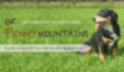 Entlebucher-Sennenhunde-ofPennymountains