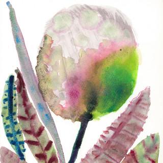 望春の花2