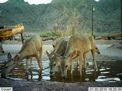 Deer 1.docx.jpg