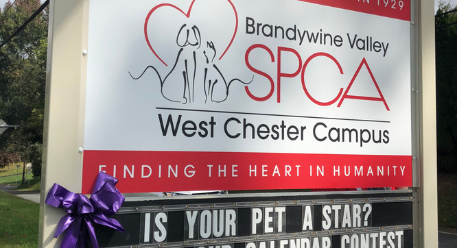 Painting the SPCA Purple
