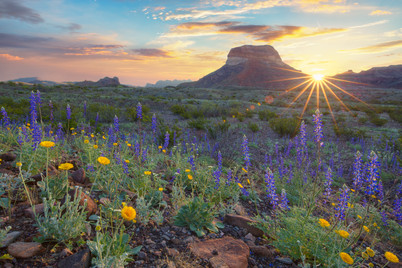 Big Bend - Bluebonnet Sunrise.jpg