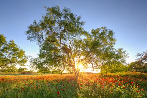 Firewheel Sunlight 1.jpg