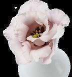 Fleur-Laporte-Intro2.png
