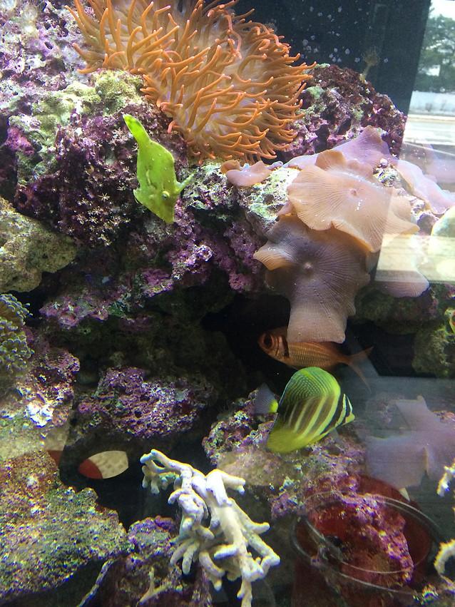 Aquarium Services | Barnegat, NJ | All Fish Aquarium Service