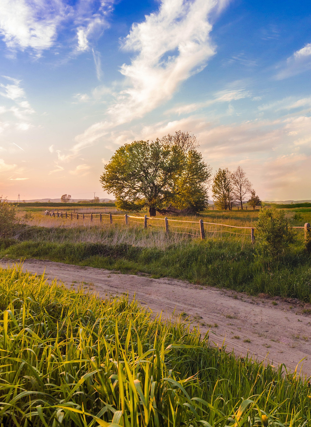 A dirt road in the middle of a sunny field with trees.