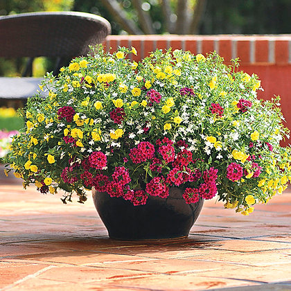 May 21st Container Garden Plant & Sip