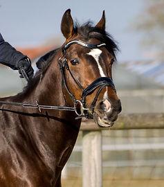 Horse Ray of Light Rescue Farm