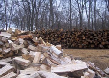 fallwood.jpg