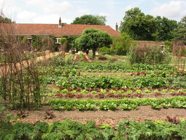 Vegetable_garden_at_Ham_House_Estate_-_geograph.org.uk_-_4530.jpg
