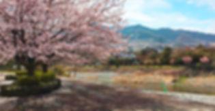 神流パーク,冬桜