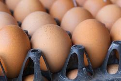 新鮮な鶏卵「アス卵」
