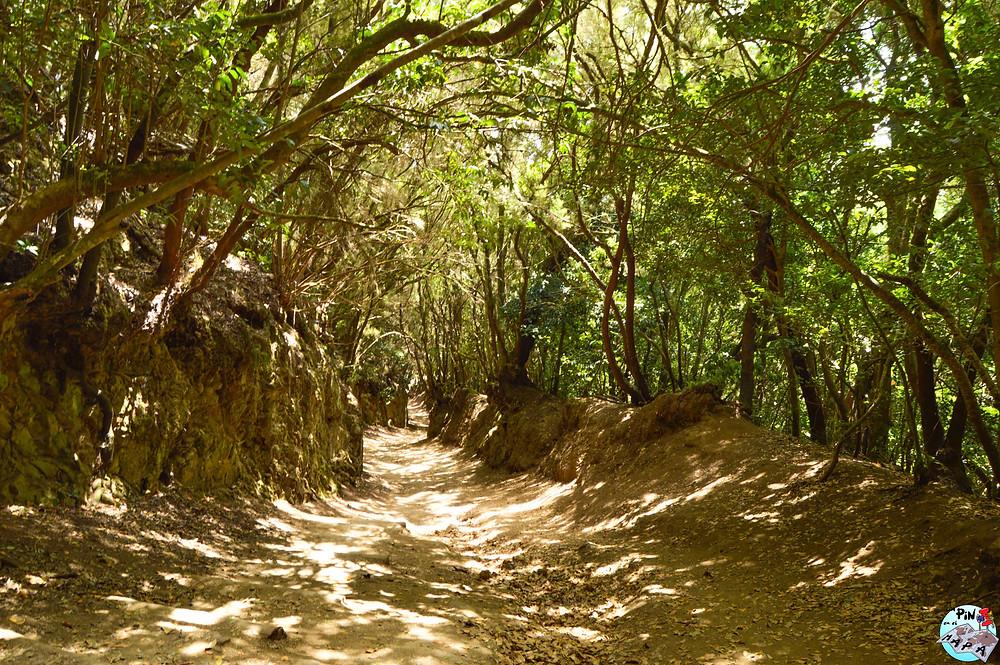 Ruta de los Sentidos de Anaga, Tenerife | Un Pin en el Mapa