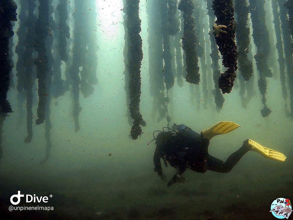 Buceo en Gateas. Rías Bajas de Galicia | Un Pin en el Mapa