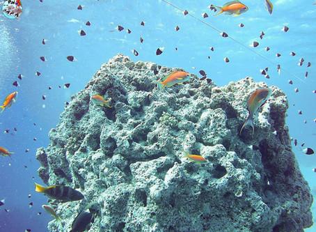 Buceo en Hurghada: experiencia, recomendaciones y consejos