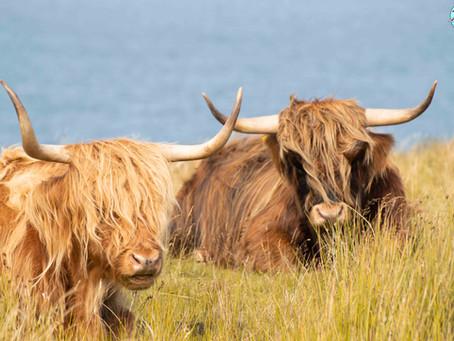 Carretera NC500 de Escocia: 28 cosas que debes saber y consejos