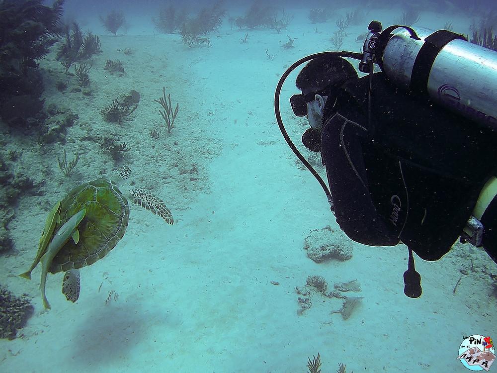 Buceo en Cozumel | Un Pin en el Mapa