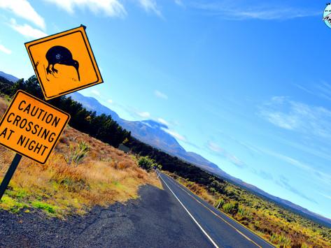 Las 5 carreteras más bonitas de Nueva Zelanda