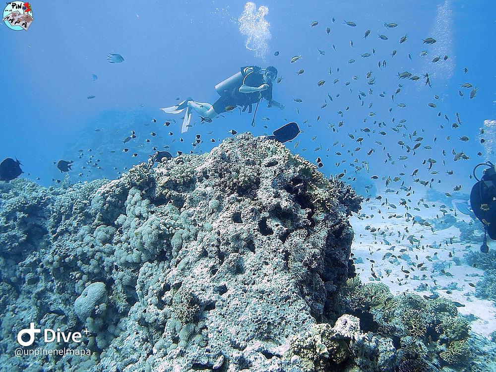 Buceo en el Mar Rojo | Un Pin en el Mapa