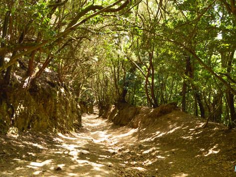 Sendero de los Sentidos de Anaga: rutas e información útil